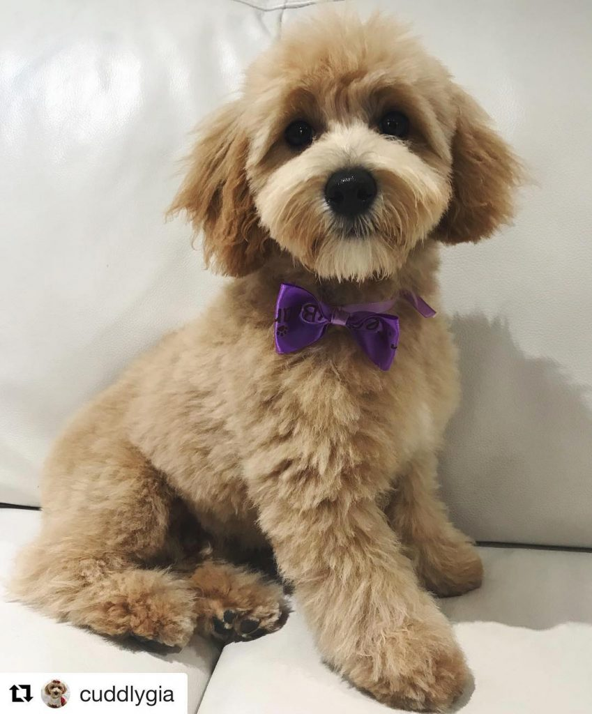Mr Teddy Bear